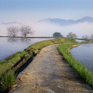銅賞「朝霧の農道」徳弘知代子