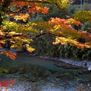 銅賞「渓流の秋」 松木勝作