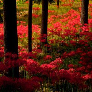 銅賞「訪れし秋を想いて」 永野育子