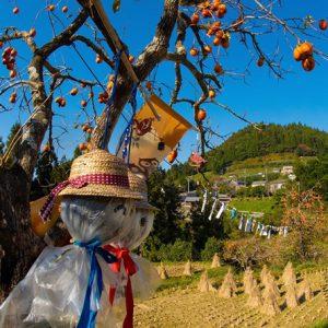 入選1「柿の秋」横山豊