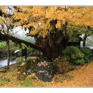 入選10 「秋色」横山彰