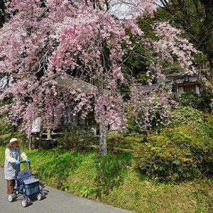 銀賞1 「郷の春」八井田晋